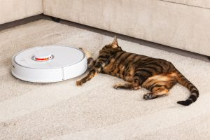 Robot vacuum in operation on a carpet with a cat laying next to it