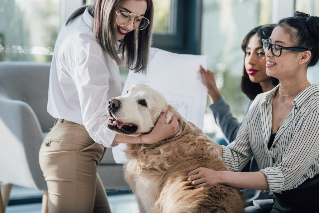 Employees petting a dog at an office