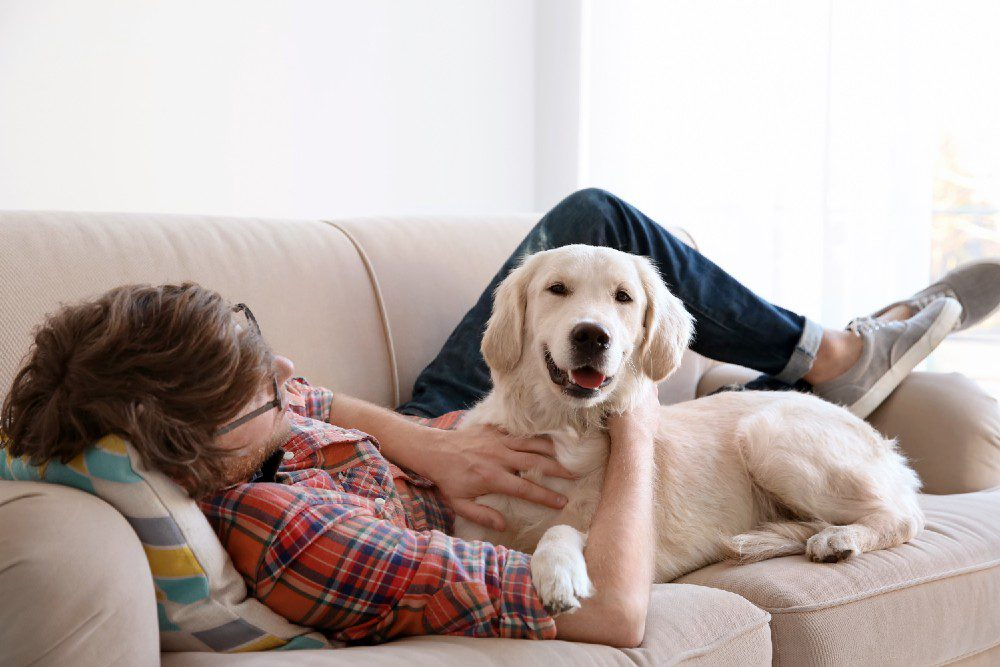 Dog and owner cuddling on a couch