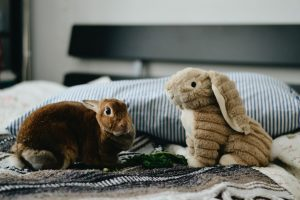 Rabbit in a bedroom with a teddy rabbit