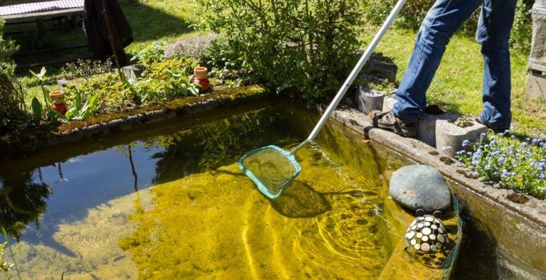 Garden pond cleaning with a fish net
